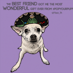 chihuahua wearing a sombrero