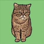 Pop Art of a Cat